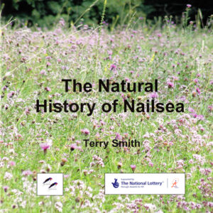 The Natural History of Nailsea